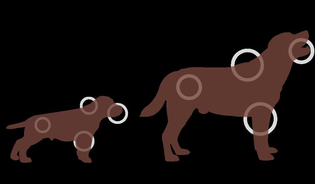 Source dieren